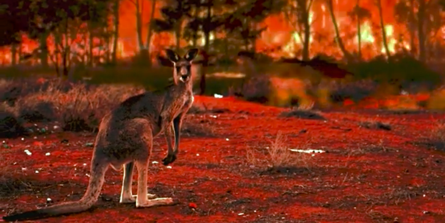 Kangaroo in wildfire - Image capture from H2020 Insurance film